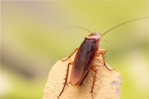cockroach on the piece of wood