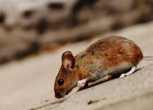 crawling mouse