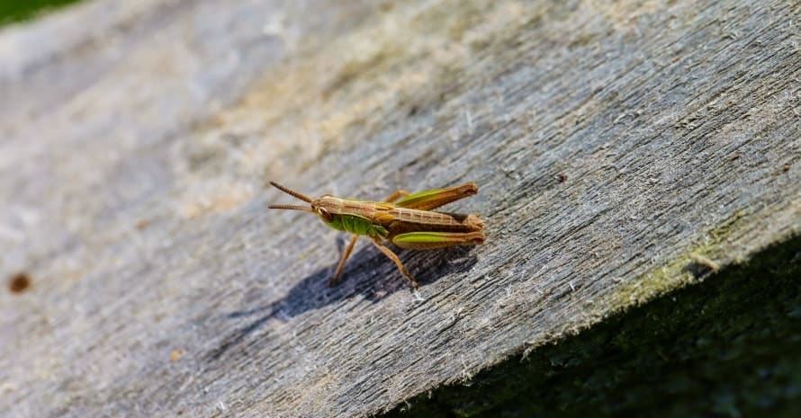 cricket on the board