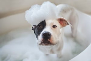 dog in the foam