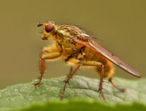 HOW TO GET RID OF HOUSE FLIES: 7 MOST EFFECTIVE METHODS