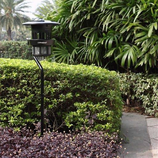 dynatrap in garden