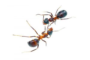 ants-pch-home