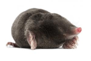 mole-main-pch2