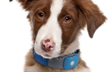 flea collar for dogs