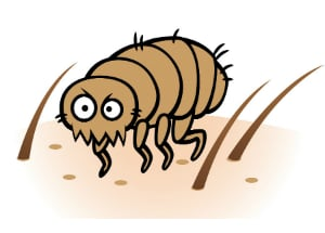HOW TO GET RID OF FLEAS: MOST EFFECTIVE WAYS - Pest Control