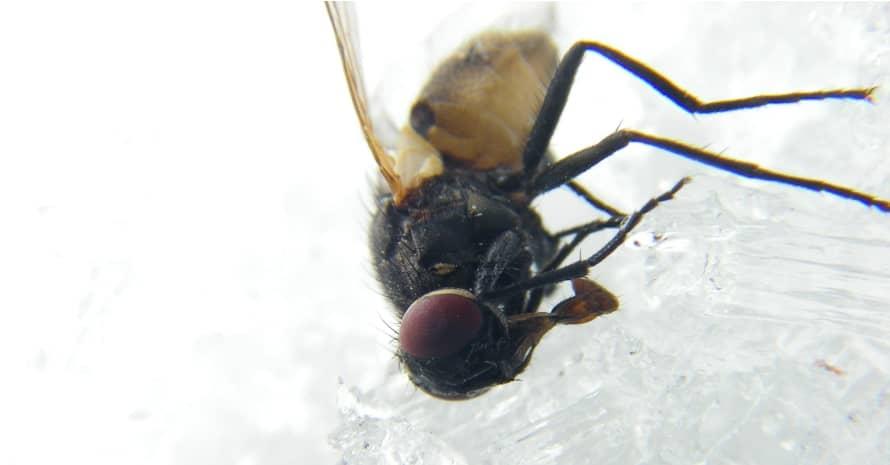fly upside down