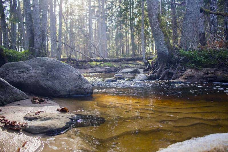 small forest river in spring