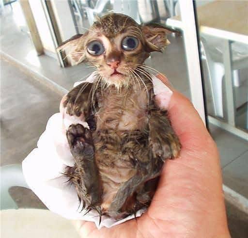 funny wet kitten
