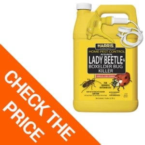 Harris Asian Lady Beetle & Box Elder Killer, Liquid Spray with Odorless and Non-Staining Extended Residual Kill Formula (Gallon)
