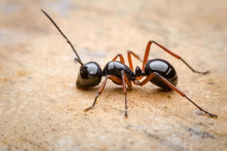The Danger of Tiny Ants in Car