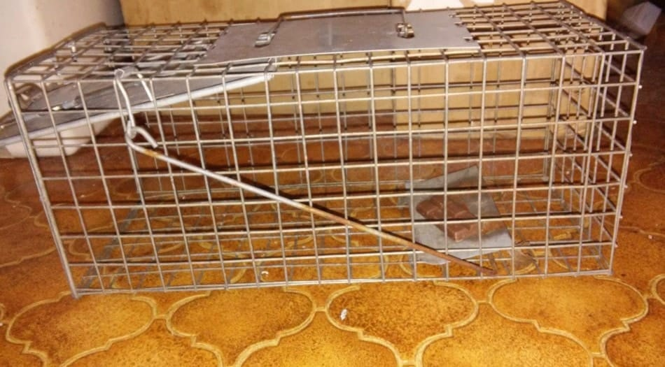 a humane trap for rats