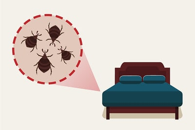 infested bed infographics drawing
