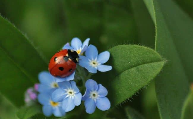 ladybug-insect