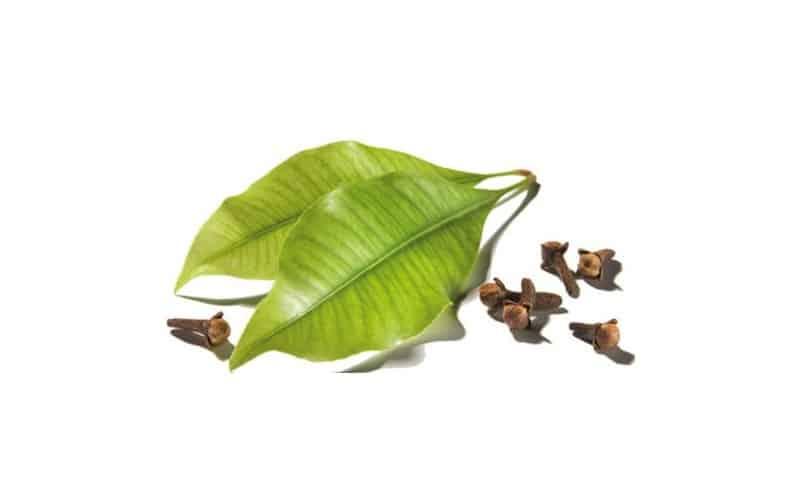 leaf-and-cloves