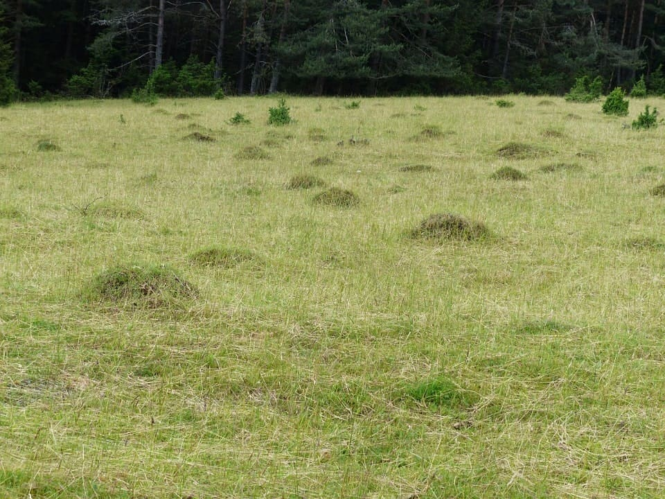 ant hill meadow