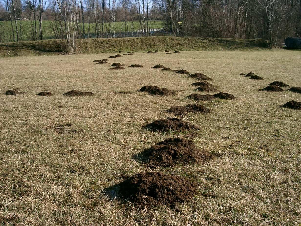 mole hills in a field