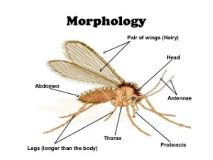 HOW TO GET RID OF MOSQUITOES AND SAND FLIES? - Pest Control