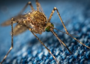 brown mosquito sitting on blue fabric cloth