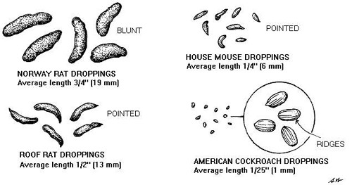 mouse poop compared to others