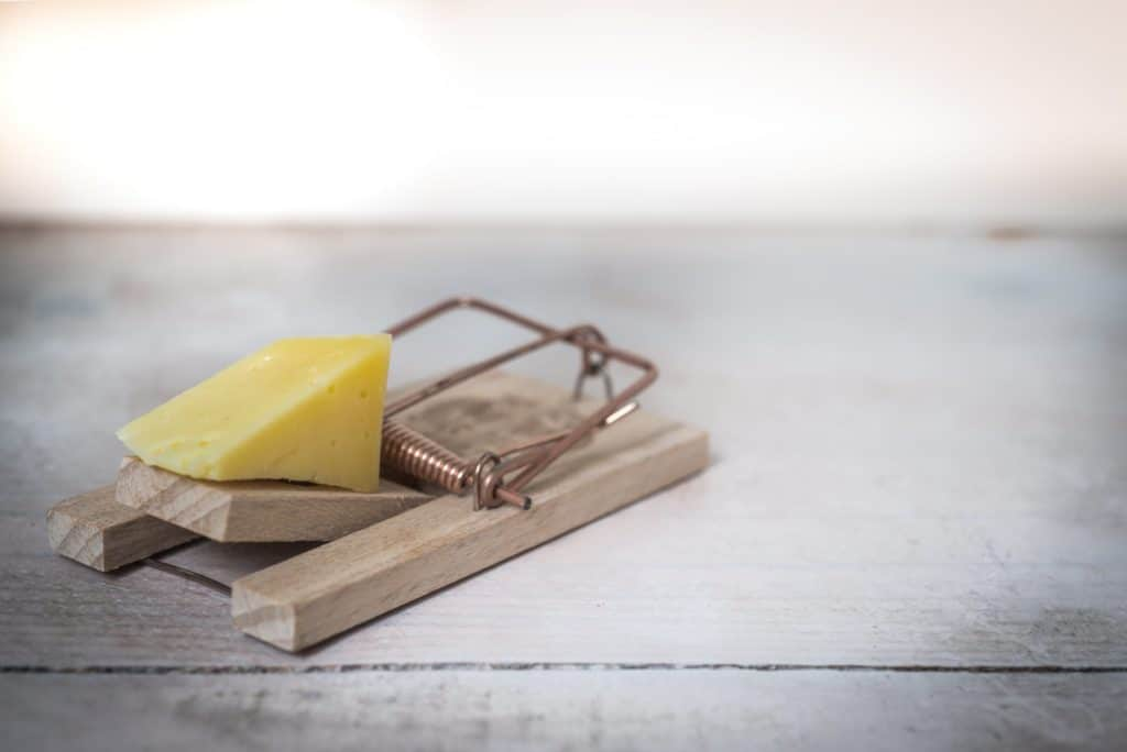 rat trap with cheese inside