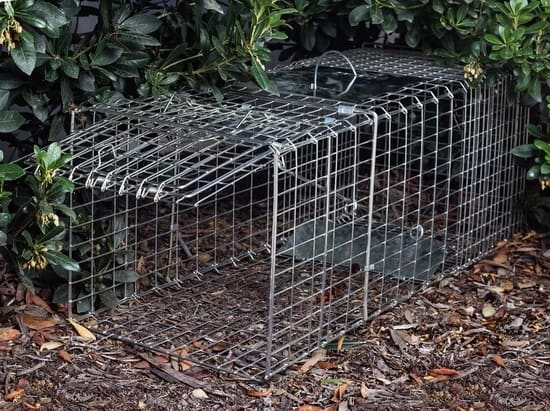 oxgord live groundhog trap