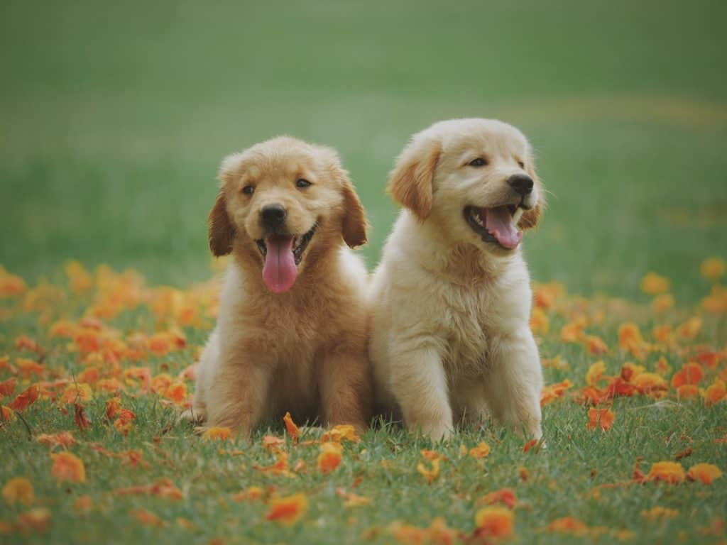 two cute puppies sitting in the garden