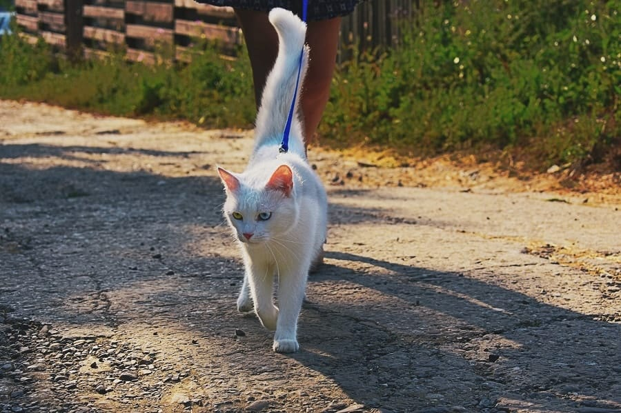white cat on the lash