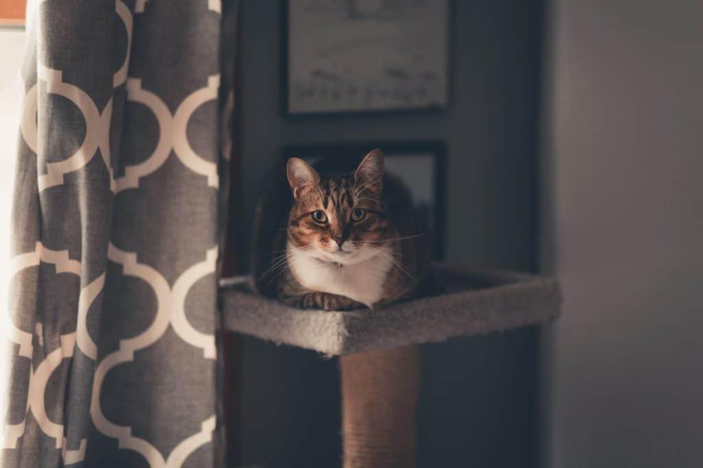 cat sitting near the window