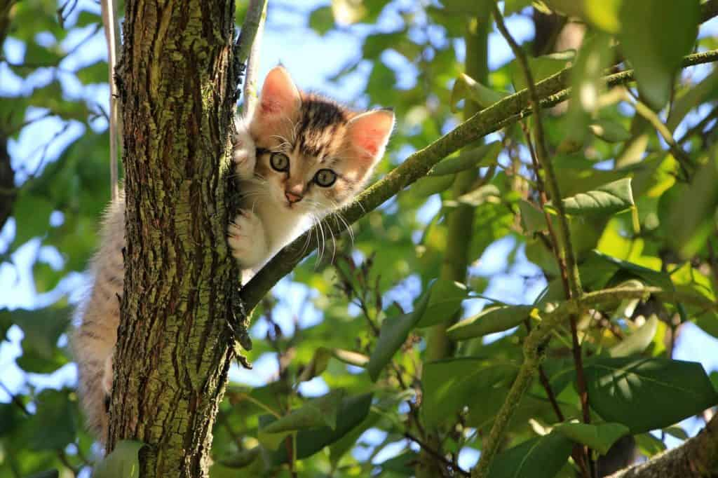 kitten on the tree