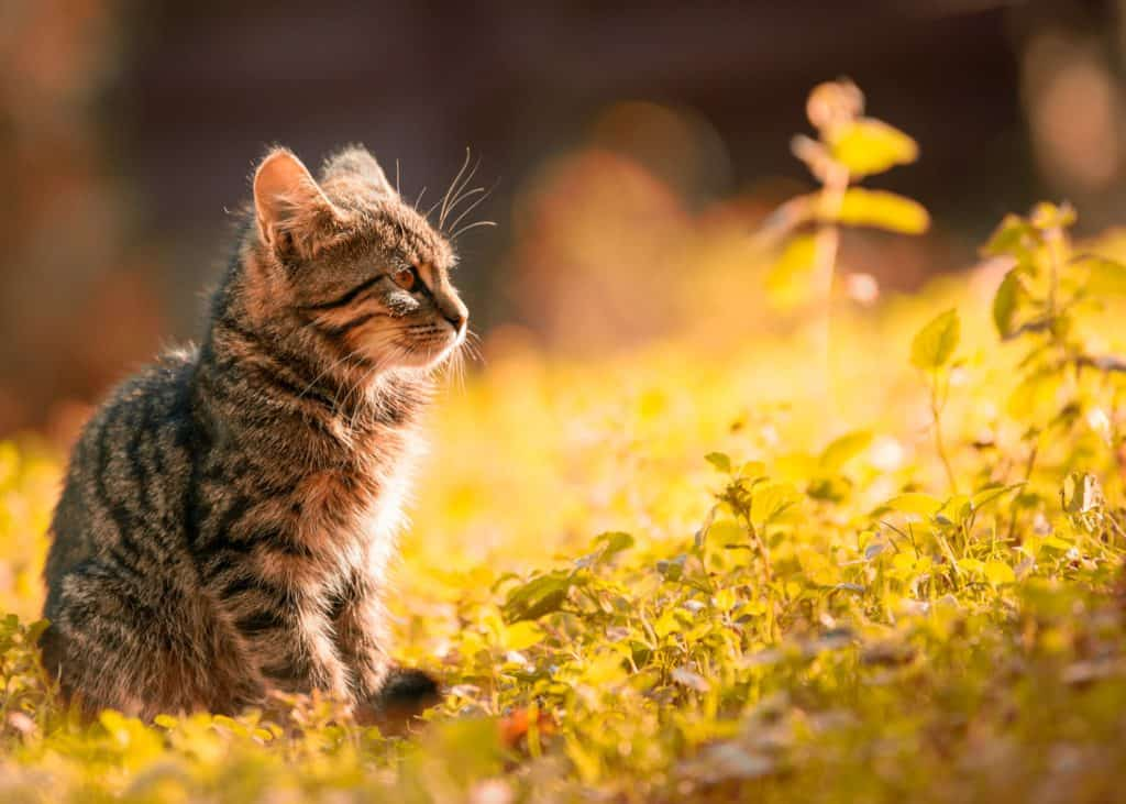 kitten in the forest