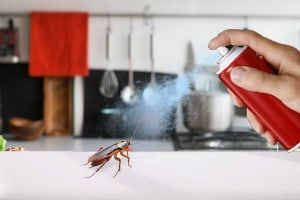 5 MOST EFFECTIVE WAYS TO GET RID OF COCKROACHES - Pest Control