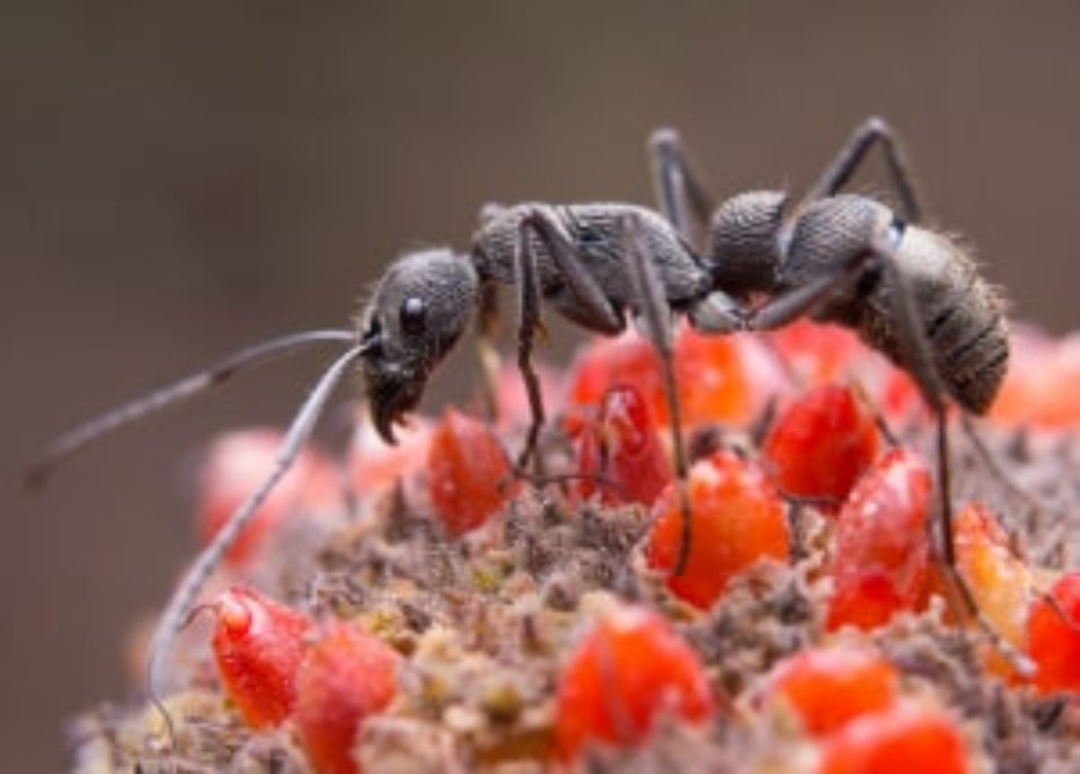 How To Get Rid Of Ants Inside Outside Your House