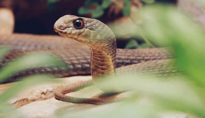 head-of-a-green-snake-in-a-green-forest