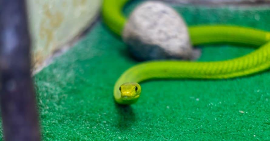 snake near the stone