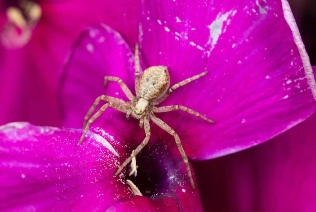 spider-and-flower