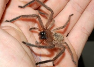 spider-in-hand