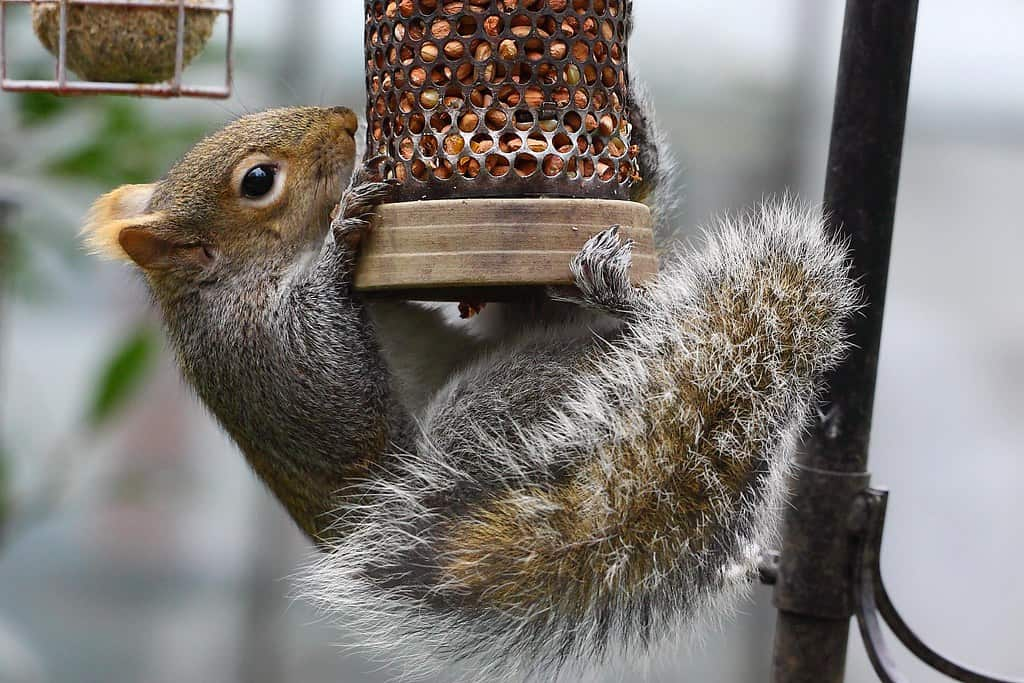 squirrel feeding on a bird feeder