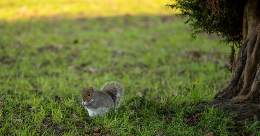 squirrel eating near a tree