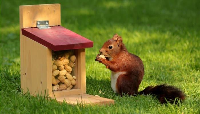 squirrel eats nuts