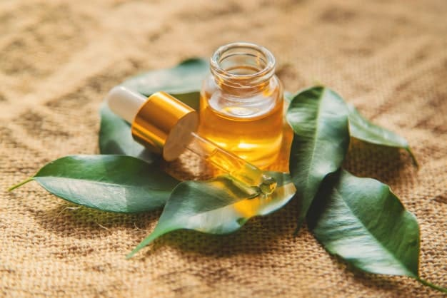 tea tree oil and tea tree leaves