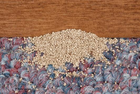 drywood termite poop