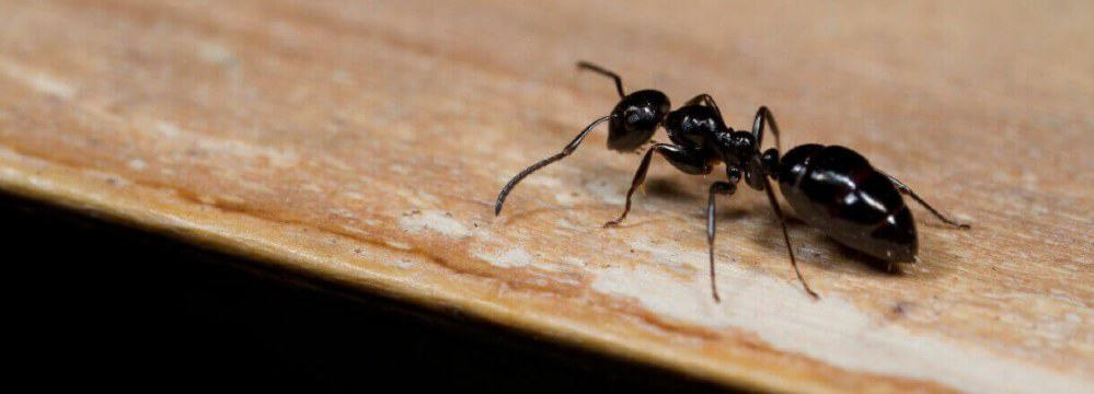 an-ant-on-the-wood
