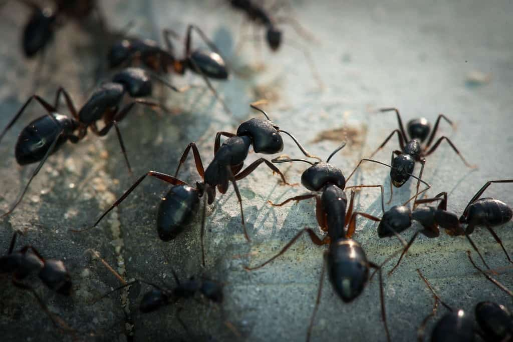 the-ants