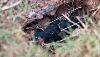Best Gopher Traps in 2021: Expert Reviews