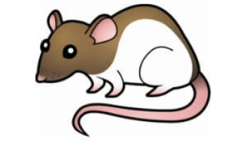 Best Rat Poisons in 2021: Expert Reviews