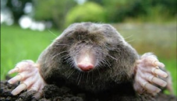 How to Get Rid of Moles: Effective Mole Removal Methods
