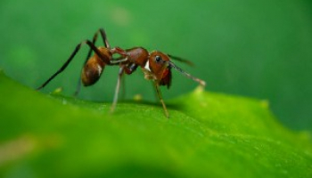Does Baking Soda Kill Ants: Popular Myths and DIY Recipes