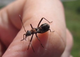Bugs That Look Like Ants: Quick Identification Guide