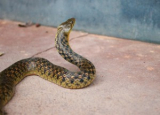 Comprehensive Snake Poop Review: How to Identify and Dispose Of